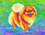 Rainbow Pomeranian