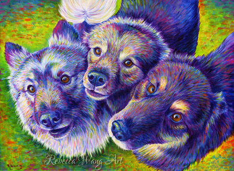 Pet Portrait - Poseidon, Zeus and Hades