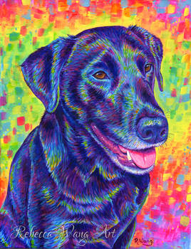 Colorful Pet Portrait - Rocky