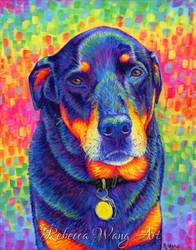 Colorful Pet Portrait - Shadow