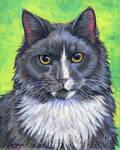Lenny Cat Portrait