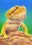 Koda Bearded Dragon Portrait