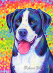 Rainbow Bicolor Dog Portrait - Pumba