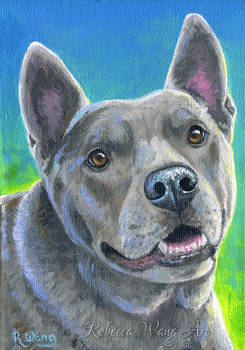 Pet Portrait - Finn