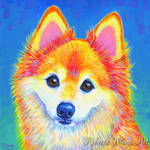 Colorful Pomeranian Portrait - Sunshine
