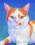 Colorful Cat Portrait - Hyler
