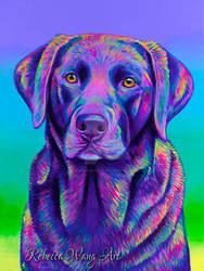 Colorful Chocolate Labrador - Cocoa