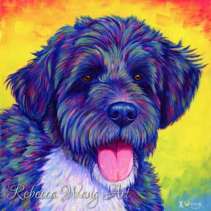 Colorful Aussiedoodle - Dipsea