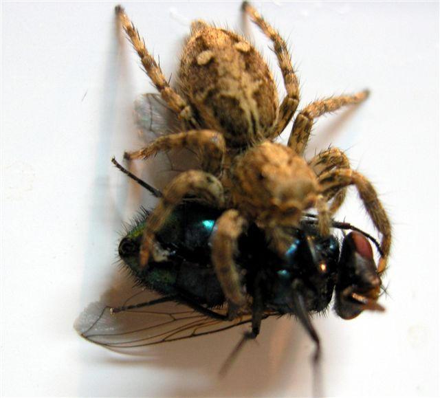 spider's dinner. by Artistic-Pie