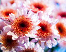 Sunday Morning Flower 011010