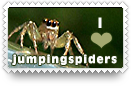 I Heart Jumping Spiders Stamp by barefootphotos