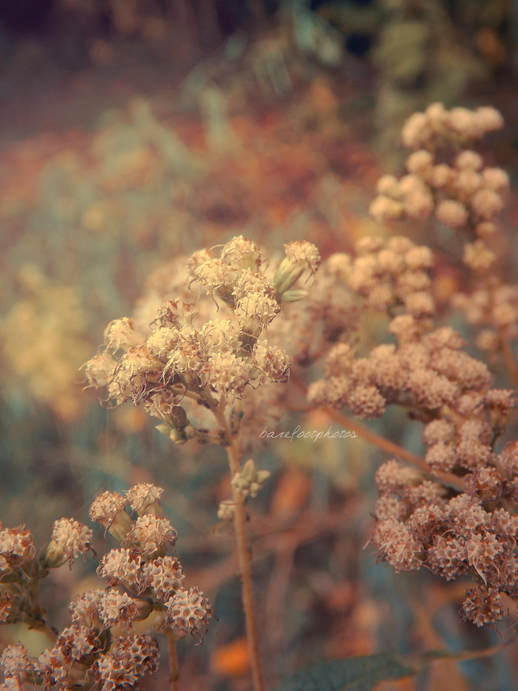 Vintage Nature By Barefootphotos