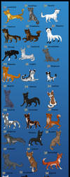 Warrior cats by Wolfjesyo