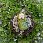 Silk Faery Baby in Nest