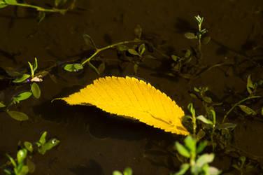 Autumn Foreboding