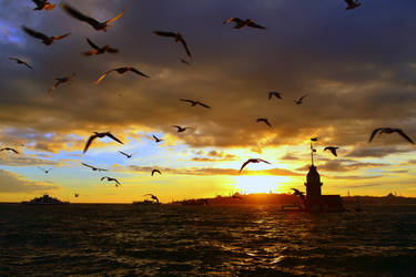 Fly Away by vabserk