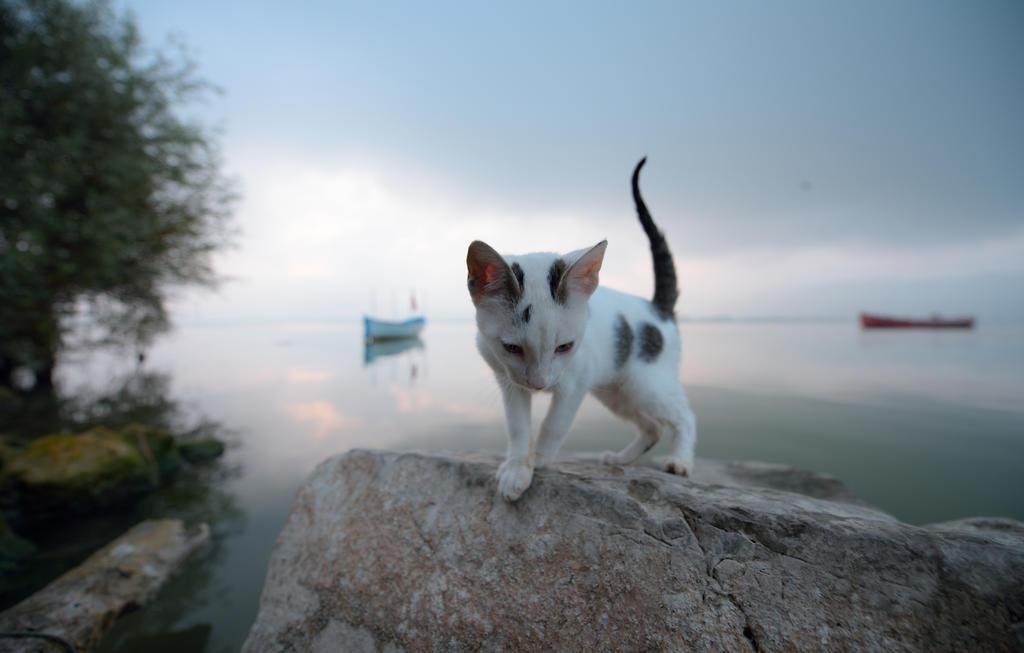 White Kitten by vabserk