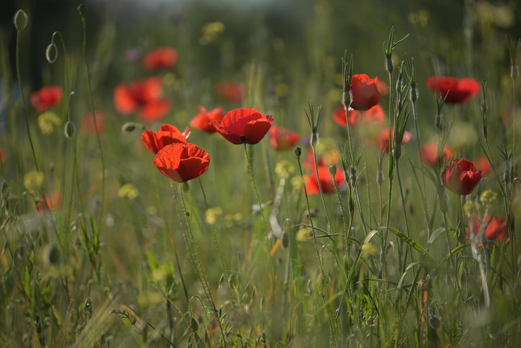 Red spring by vabserk