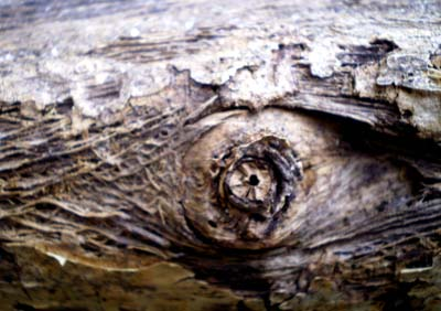 Wood Texture  (13) by designtreasure