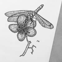 Dragonfly // pen drawing