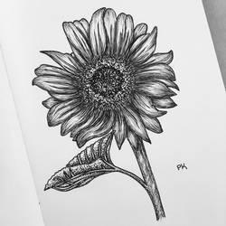 Sunflower // pen sketch