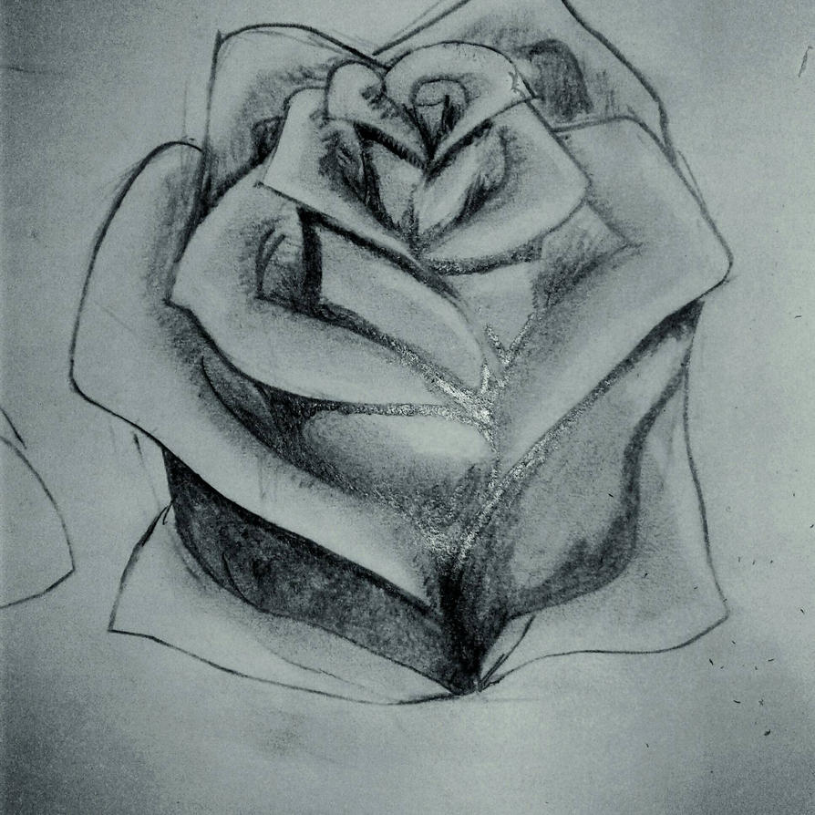 Rose by Suzi3r