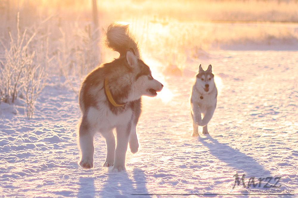 Winter puppy run by Marzzunny