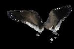 Wings Png Precut 2