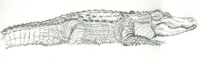 Daisy the Alligator by WarrenJB
