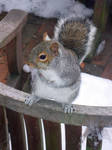 Squirrel waiting for tribute