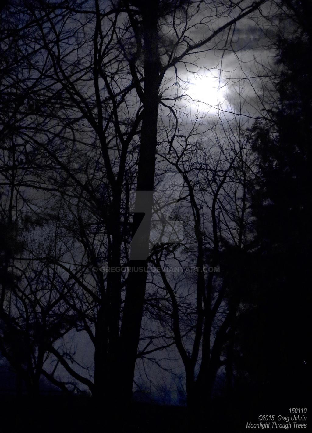 Moonlight Through Trees by GregoriusU