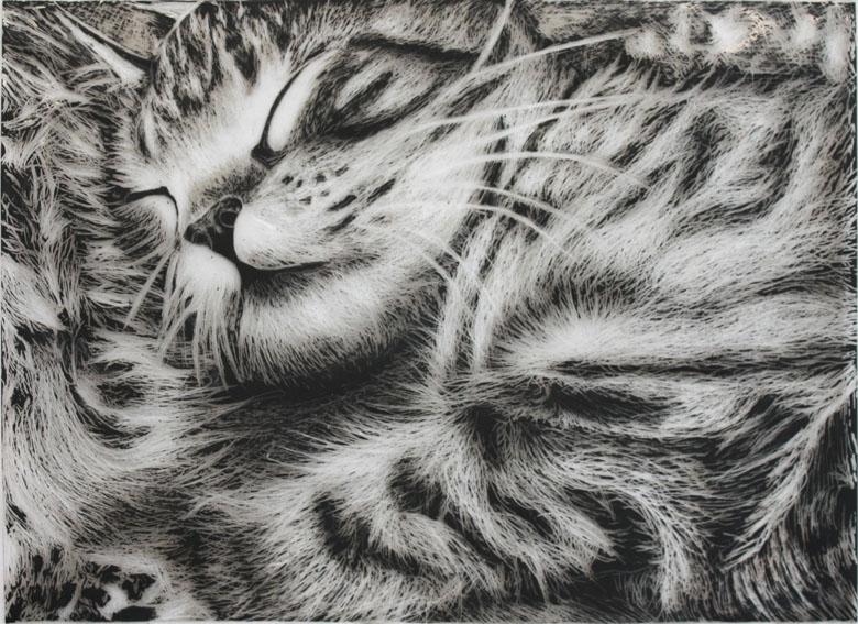 Scratch Art Of Sleeping Cat By Artsanpuc101