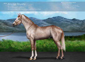 MSR Absolut Royalty (CAN)