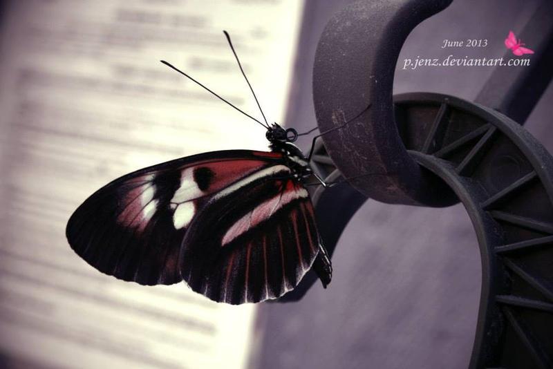 Butterfly 4 by pjenz