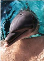 dolphin by Emilyidiosyncrasy