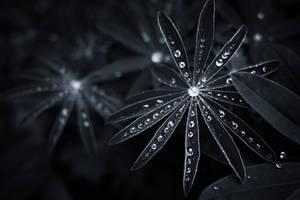 Star drops by MatsHolmberg