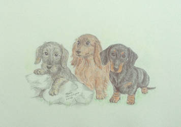 Dachshund puppies by KarinM