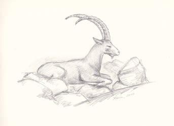 Alpine ibex by KarinM