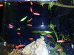 Neon Glowing Fish
