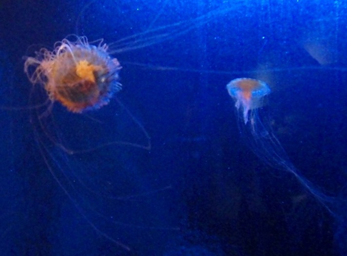 'JELLY FISH ONE'