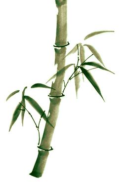 Single Stem Bamboo by tepest on DeviantArt