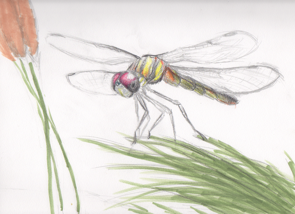 Dragonfly Anatomy Practice by BenRusk on DeviantArt