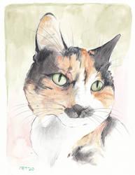 Pet Portrait - Bean