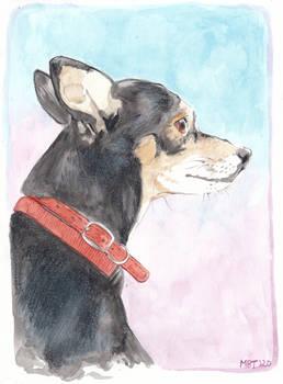 Pet Portrait - Charlie