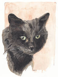 Pet Portrait - Pavi