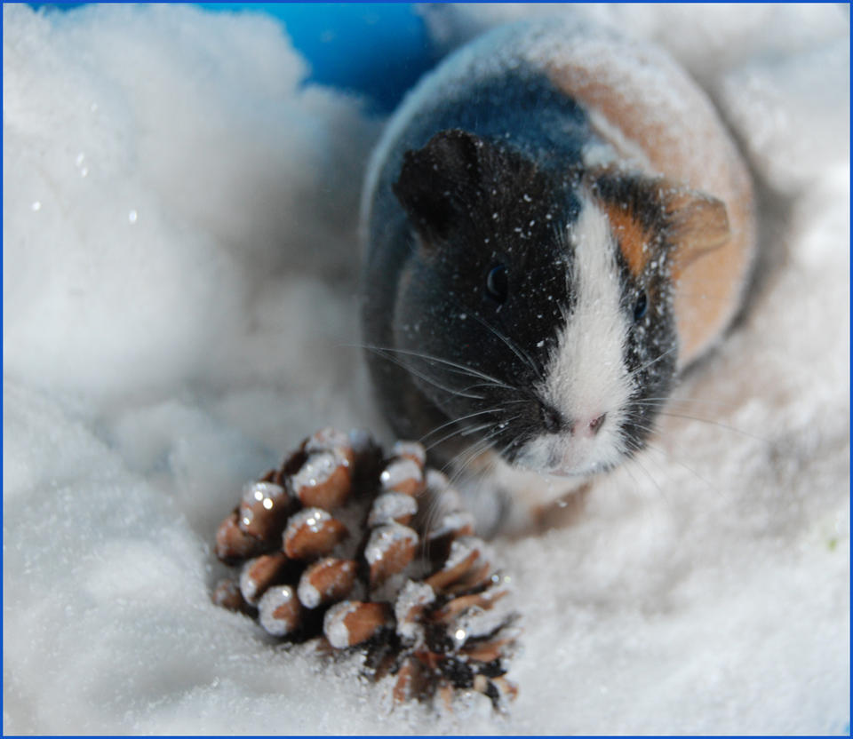Awww Snowww by Ciocia-Krysia