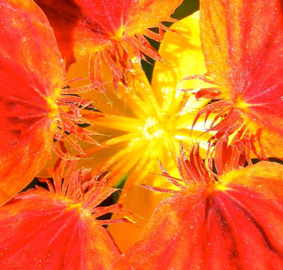Pollen by chewupablotter