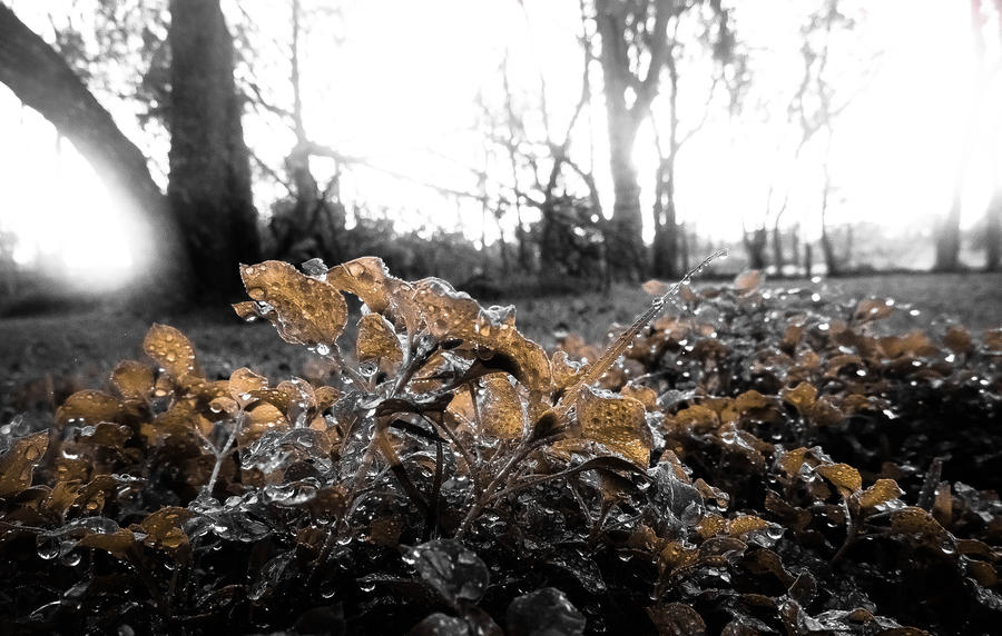Decayed Autumn by HannahDoma
