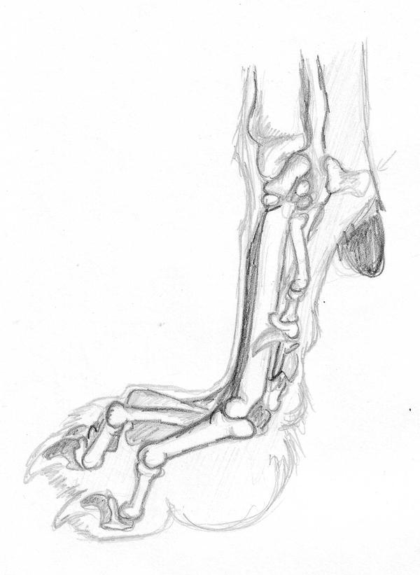Wolf paw bones by RiverRaven on DeviantArt