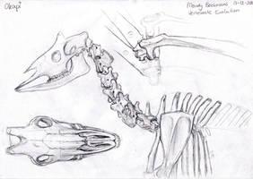 Okapi anatomy by RiverRaven
